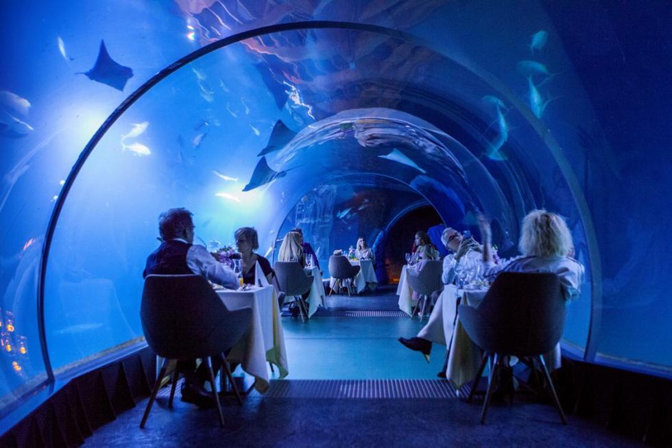 Podwodna kolacja wewrocławskim zoo zgwiazdami