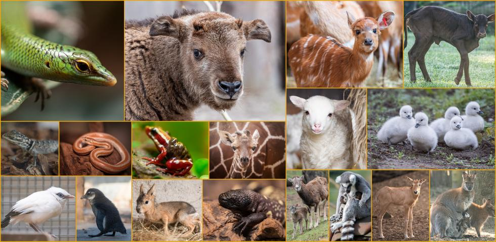 Trwa baby boom wewrocławskim zoo